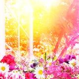 La chaleur et fleurs d'été Photos stock