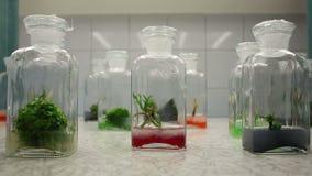 La chambre de croissance de plantes médicinales de scientifique de recherches met la culture en bouteille banque de vidéos
