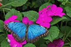La Chambre et la Marine Cove de papillon de Sertoma en Sioux Falls, le Dakota du Sud est une oasis tropicale pendant toute l'anné photographie stock libre de droits