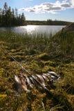 La chance du pêcheur Photographie stock