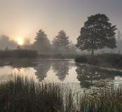 La charca brumosa temprano por la mañana con las siluetas de árboles Imagenes de archivo
