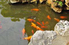 La charca de Koi Fish en el templo viejo del ` s de dios de la ciudad y Yuyuan cultivan un huerto, Shangai Imagen de archivo