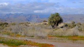 La Charca en Maspalomas, Gran Canaria, España del refugio de aves Fotografía de archivo libre de regalías
