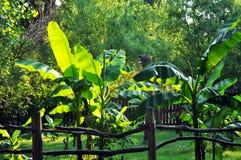 La charca es rodeada por los árboles tropicales con una cerca de madera en el primero plano fotografía de archivo libre de regalías