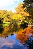 La charca hermosa del otoño con los patos y los árboles reflejó en agua Imagen de archivo