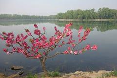 La chaussée occidentale (xidi) avec la pêche fleurissante images stock