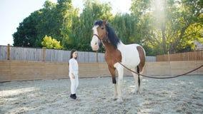 La chica joven bonita viene al caballo y a acariciarlo en hipódromo metrajes