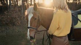 La chica joven en sweather amarillo abraza el caballo marrón masculino dulce en la cámara lenta de madera metrajes