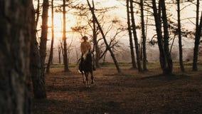 La chica joven está galopando a caballo con la cámara lenta de madera del otoño almacen de metraje de vídeo