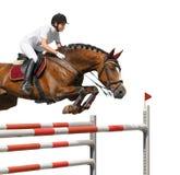 La chica joven que salta con el caballo de bahía Foto de archivo libre de regalías