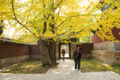 La Chine, Asie, Pékin, le temple parfumé de Œthe de ¼ d'ï de parc de colline d'Azure Clouds Photographie stock