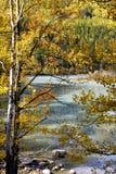 La Chine/Xinjiang : arcoss circulants de flot les arbres d'automne Photographie stock