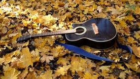 La chitarra si trova nella foresta sulle foglie gialle Caduta delle foglie di giallo sulla chitarra Foresta d'autunno video d archivio
