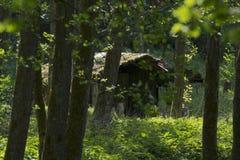La choza dilapidada en una luz inundó, bosque del cuento de hadas Imagen de archivo libre de regalías