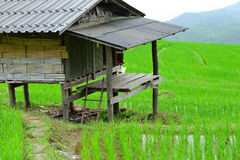 La choza en campo del arroz Imágenes de archivo libres de regalías