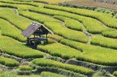La choza en campo del arroz de la terraza Fotos de archivo libres de regalías