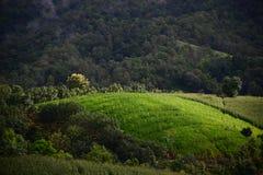 La choza en campo verde del arroz Foto de archivo
