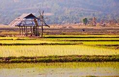 La choza vieja en una granja del arroz. Imágenes de archivo libres de regalías