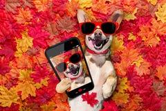 La chute d'Autmn laisse le chien photographie stock libre de droits