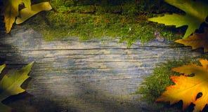 La chute d'automne laisse le fond ; feuille jaune sur le fond en bois Images libres de droits