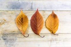 La chute d'automne part sur la table en bois rustique en tant que backgrou d'email de vente Images stock