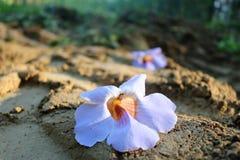 La chute de fleurs à la terre image stock