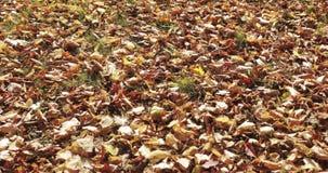 La chute et le soleil de feuilles d'automne brillant par la chute part Beau fond d'horizontal banque de vidéos