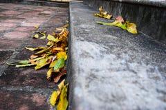 La chute jaune part sur des étapes de granit le temps d'automne photo libre de droits