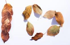 La chute part sur un fond blanc sous forme de coeur Élément de conception d'automne Photos libres de droits