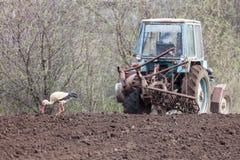 La cicogna accanto al trattore ara la terra Immagini Stock