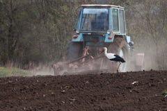La cicogna accanto al trattore ara la terra Fotografie Stock Libere da Diritti