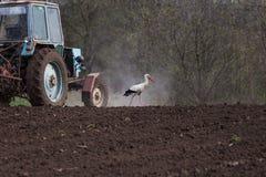 La cicogna accanto al trattore ara la terra Fotografia Stock