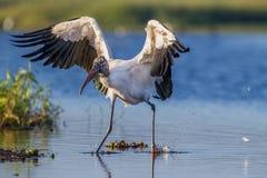 La cicogna di legno con le ali si è sparsa largamente fotografia stock libera da diritti