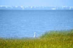 La cicogna si nasconde in erba alta sulla riva di mare Fotografie Stock