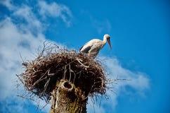 La cicogna si siede in un nido su un'alta colonna Fotografie Stock Libere da Diritti