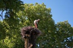 La cicogna si siede in un nido su un'alta colonna Immagine Stock