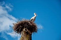 La cicogna si siede in un nido su un'alta colonna Fotografia Stock