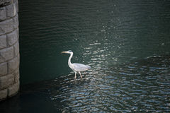 La cicogna vive nella città fotografie stock libere da diritti