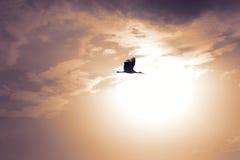 La cigüeña en el sol fotografía de archivo