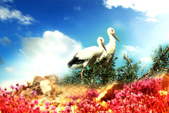 La cigogne blanche orientale Photo libre de droits