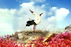 La cigogne blanche orientale Images stock