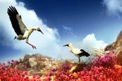 La cigogne blanche orientale Photographie stock