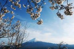 La cima alta vicina di bella montagna di Fuji con la copertura di neve sulla cima con potrebbe e sul fiore di ciliegia in Giappon immagine stock libera da diritti