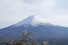 La cima alta vicina di bella montagna di Fuji con la copertura di neve sulla cima con potrebbe e sul fiore di ciliegia nel Giappo fotografie stock