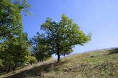 La cima della collina con gli alberi Immagine Stock