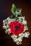 La cima giù ha sparato di belle gocce di rugiada e della rosa rossa Immagini Stock