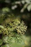 La cime d'arbre de l'arbre de buisson Photographie stock