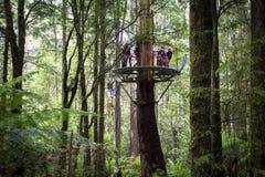 La cime d'arbre de mouche d'Otway risque route d'océan d'Australie de Zipline Melbourne la grande photos stock