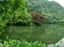 La Cina Hangzhou nove correnti, longjing Fotografie Stock Libere da Diritti