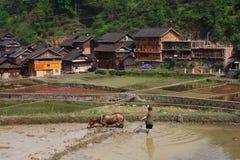 La Cina rurale, cavallo che tira un aratro nel giacimento del riso. Immagine Stock